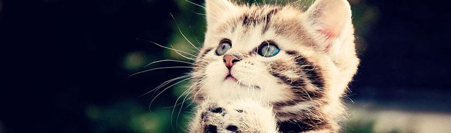 catboarding